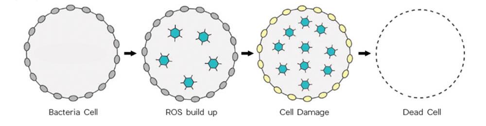 vernietiging van bacteriën met licht