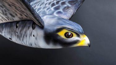Robot drone vogel