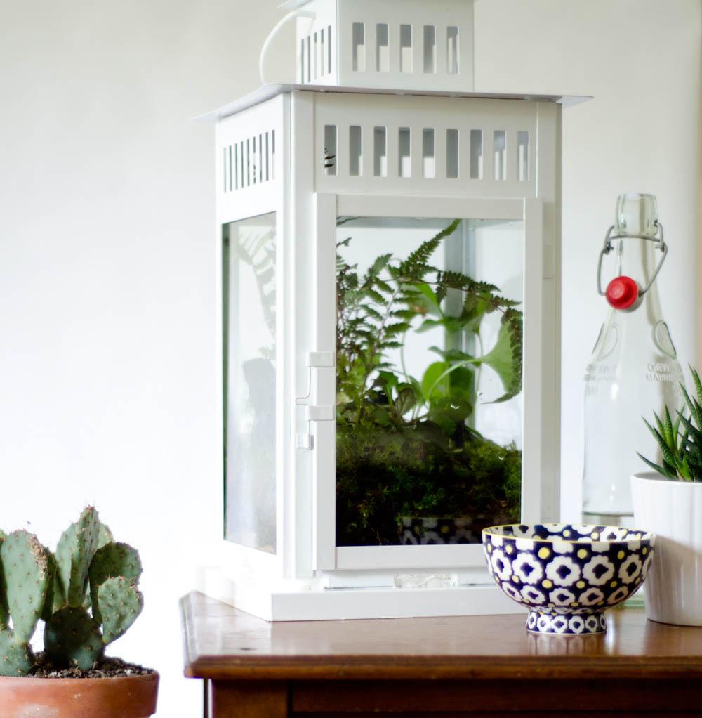 Ikea hack terrarium