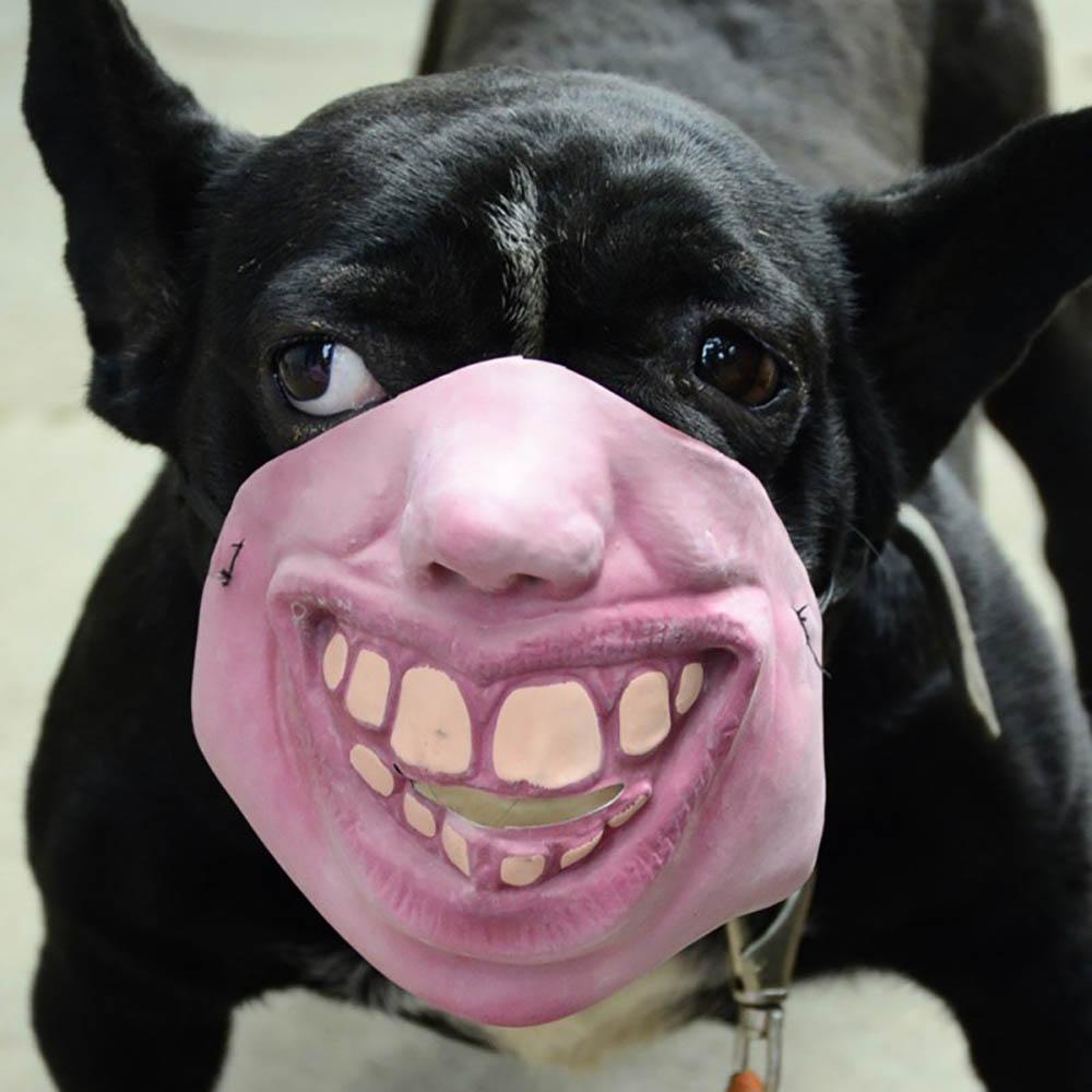 AliExpress honden masker