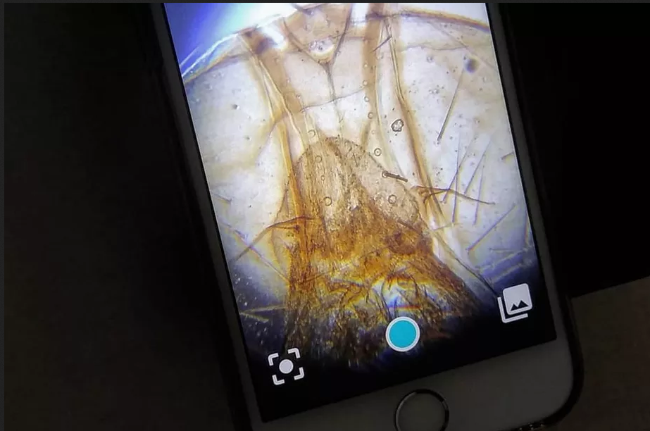 Diple Kickstarter microscoop