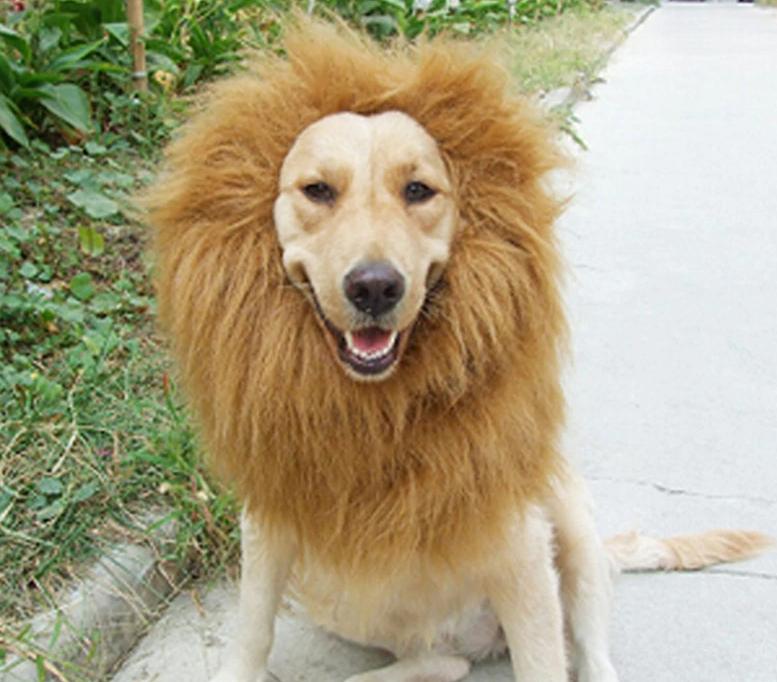 AliExpress hondenkraag