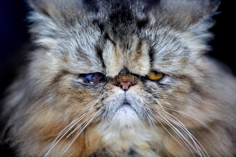LuluPet kattenbak
