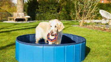 hondenzwembad Lidl
